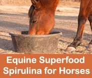 EQUINE SUPERFOOD: SPIRULINA FOR HORSES